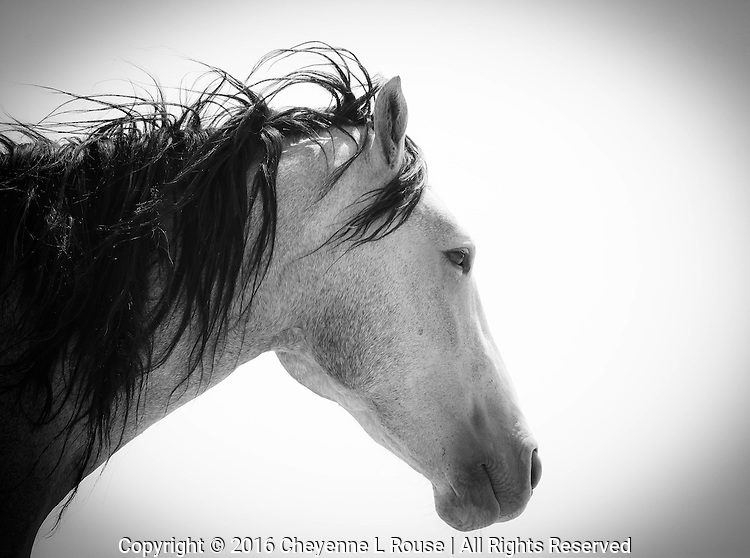 Contemplation - Wild Horse - Utah - Black and White