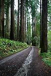 Redwoods, Prairie Creek Redwoods State Park, California