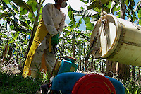 A Costa Rican worker filling a pump sprayer with chemicals used for maintenance of plants on the banana plantation near Puerto Limon, Costa Rica, 2 September 2004. Eighty percent of the exported bananas in the world are grown in Latin America. Local farms have no other alternative than to sell for a price offered by the multinational company. When working conditions and ecology is in question, the corporations do not have any responsibility as they do not own plantations. Local governments in the attempt of organizing banana export provide low duty taxes on export, they try to eliminate social and enviromental politics to attract the big companies to their countries.