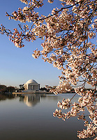 Cherry Blossoms Tidal Basin Washington DC<br />