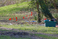 Pictured: Forensic markers at Ystrad Mynach Park in south Wales, UK. Saturday 13 April 2019<br /> Re: A 13-year-old boy has died after being found unconscious in Ystrad Mynach Park, Caerphilly County, at about 7.20pm on Friday 12 April.<br /> The teen was taken to University Hospital of Wales in Cardiff where he was pronounced dead.