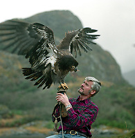 Killarney wildlife ranger Pat O'Connell with the American Bald eagle he nursed back to health in 1987, It was said the eagle had flown across the Atlantic ocean before arriving in Ireland exhausted where he was brought back to health over six months and then flown by Aer Lingus back to America where he was released.<br /> Picture at Eagle's Nest Mountain, Killarney by Don MacMonagle<br /> www.macmonagle.com