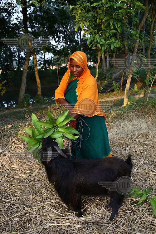 34 year old Mahmuda received a microfinance loan from IFAD (International Fund for Agricultural Development) which she has used to buy goats and a cow.