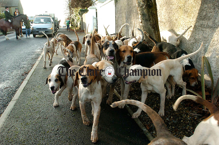 Eager hounds await their call at the  East Clare Harriers Hunt at Clonlara. Photograph by John Kelly.