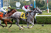 Princesa Carolina (no. 4) wins Race 6, Sep. 3, 2018 at the Saratoga Race Course, Saratoga Springs, NY.  Ridden by Ricardo Santana, Jr., and trained by Kenneth McPeek, Princesa Carolina finished  3/4 lengths in front of Toy Moon (no. 3).  (Bruce Dudek/Eclipse Sportswire)