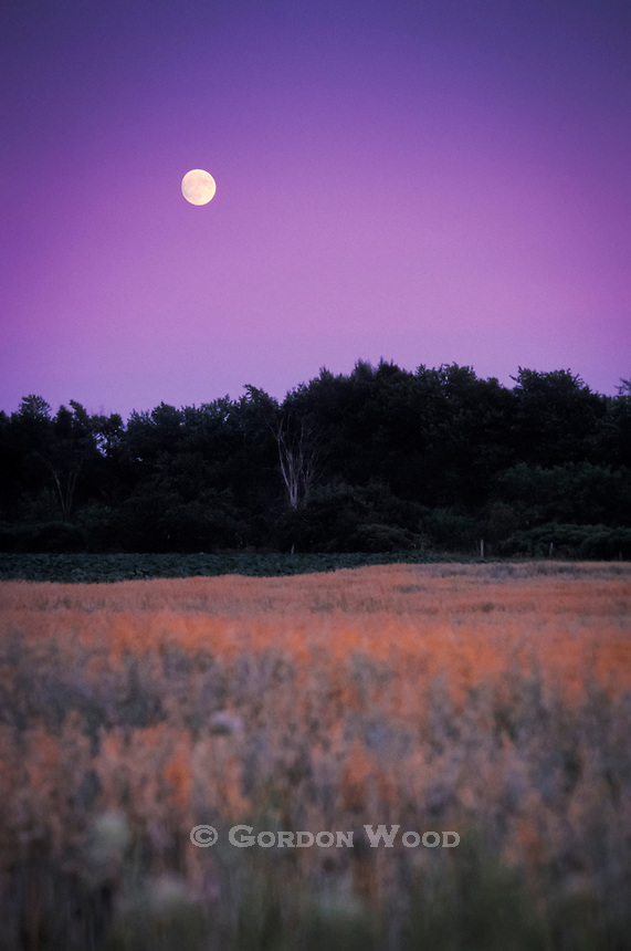 Moon over Farm Field and Trees after Sunset