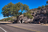 Just a few mile outside of Fort Davis on the way to the Davis Mountain State Park we stop at this great rest stop where these giant boulders tumble down the mountain side and came to rest next to this wonderful old oak tree.  They added a picknic table and you have a unique rest stop in the Davis mountains.