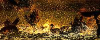 Whistling Ducks at Sunset, Kakadu National Park, Northern Territory,.Australia