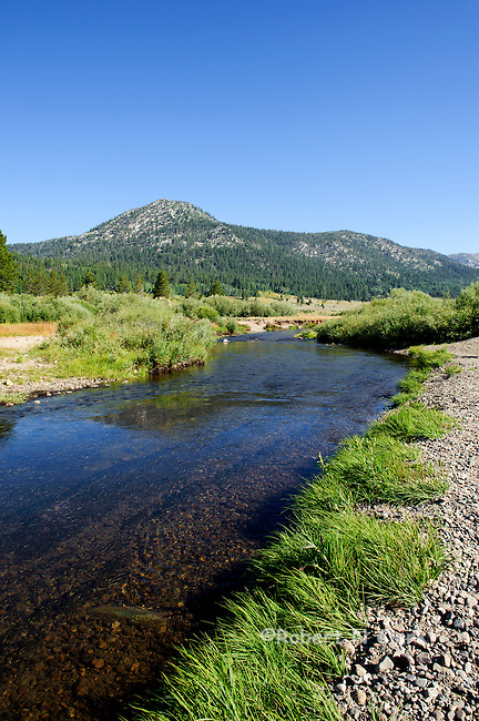 West Fork of the Carson River