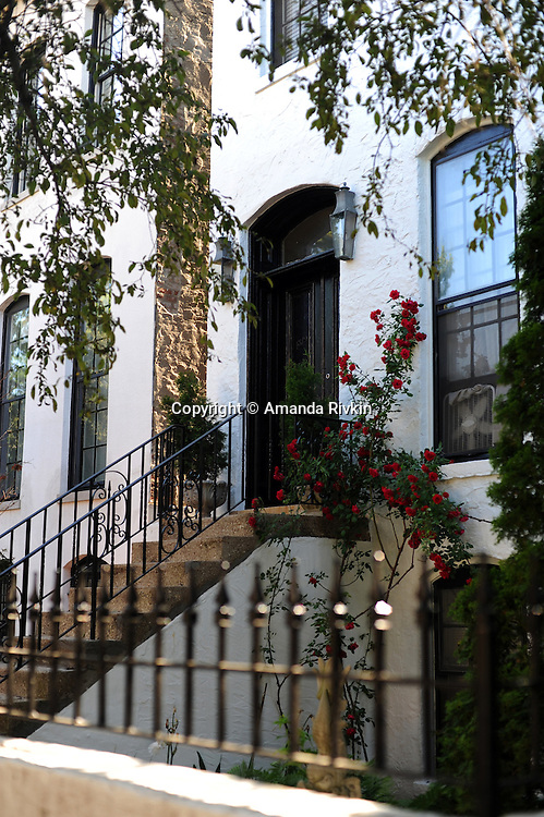A rosebush is seen outside a home on Lincoln Park West in Old Town in Chicago, Illinois on June 20, 2009.