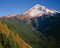 ORCAN_048 - USA, Oregon, Mount Hood National Forest, Mount Hood Wilderness, West side of Mount Hood and autumn shrubs on slopes of Bald Mountain.