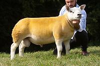 27.8.2019 Texel Sheep English National