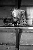 SWEDEN, Swedish Lapland, Vintage Seal Skin Snow Boots