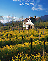 The exterior of a winery building with a field of mustard flowers in the foreground. Napa Valley, California.
