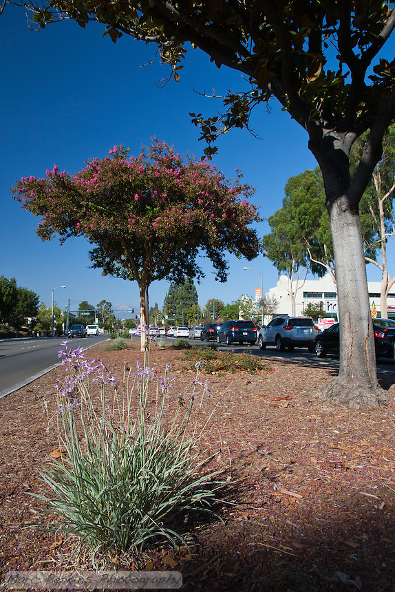"""View north along the southern median of the intersection. This may have been part of the 2015 rebuild of the Grand Avenue and Diamond Bar Boulevard intersection for Diamond Bar's 2015 """"Grand Avenue Beautification"""" project, landscape architecture for the project was by David Volz Design."""