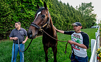 BALTIMORE, MD - MAY 15: Sporting Chance grazes near the stakes barn during Preakness Week at Pimlico Race Course on May 15, 2018 in Baltimore, Maryland (Photo by Scott Serio/Eclipse Sportswire/Getty Images)