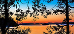 Saltspring Island, British Columbia: Pine trees silhouetted at dusk on Beaver Point with Swanson Channel in the background, Ruckle Provincial Park