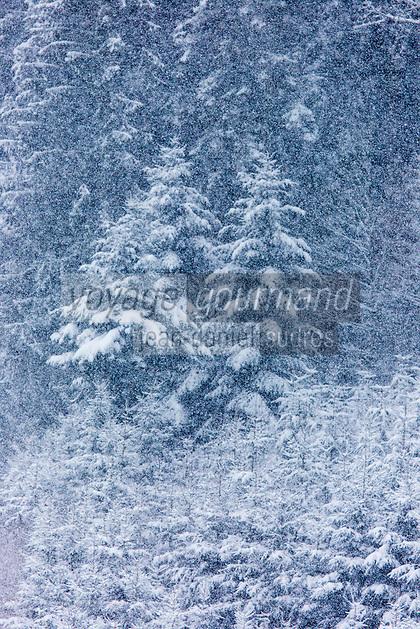Europe/Allemagne/Bade-Würrtemberg/Forêt Noire/Gengenbach: La neige sur la Forêt Noire