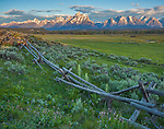 Grand Teton National Park, WY: Morning light on the Teton Range with weathered fence and spring wildflowers in the foreground