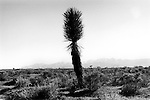Mojave Desert, California USA 2001. .