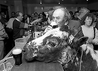 1992 The Blackwater Taverm (owner Teddy O'Neill) Direendraugh, Blackwater, Sneem, County Kerry Ireland 1992:  The Gay Byrne Radio Show, (Ireland's most listened to show) celebrated 'Big Bertha', reaching 48 years of age and appearing in the Guinness Book of Records as the world's oldest cow. In this photograph show  owner Farmer Jerome O&rsquo;Leary celebrates in  the pub as the party is broadcast live on air in 1992. Bertha left her 'mark' on the floor during the transmission.<br /> Big Bertha died on New Year's Eve 1993.<br /> Photo: Don MacMonagle <br /> e: info@macmonagle.com
