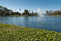 Echo Park, near downtown Los Angeles, on Aug. 22, 2017.<br /> (Photo by Marc Campos, Occidental College Photographer)