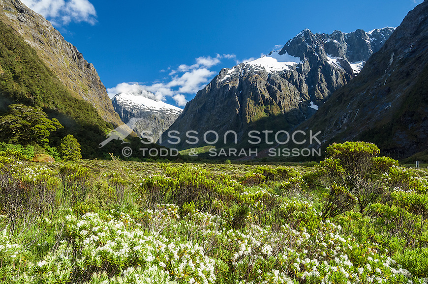 View from Monkey Flat, Milford Sound Road, Fiordland National Park, South Island,New Zealand. - stock photo, canvas, fine art print