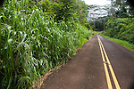 The overgrown raod to Keahua Arboretum, Kauai, Hawaii