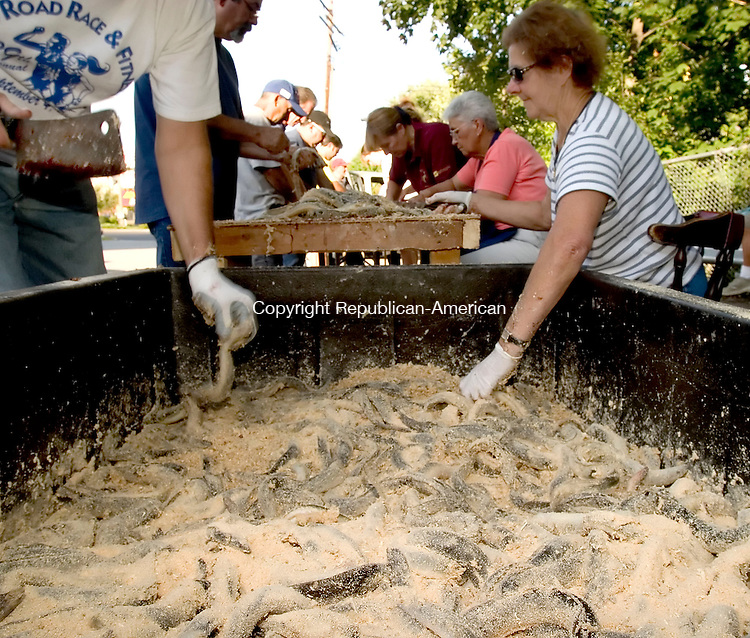 NAUGATUCK, CT - 26 AUGUST 2005 -082605JS02--Longtime volunteers Frances Branco, right, reaches in for another eel as she and many other volunteers help prepare eels on Friday in preperation for next weekends annual Sao Paio Festival at the Portguese Club in Naugatuck. --Jim Shannon / Republican-American  -- Frances Branco Naugatuck, Sao Paio Festival,  Portguese Club are CQ