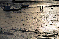 Europe/France/Bretagne/35/Ille et Vilaine/Cancale:Lumiere du soir sur le port ostréicole et ses chalants