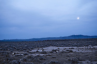 Sage Grouse strutting  on lek in easterrn Oregon's high desert region.  Photo taken before sunrise.  March.