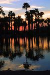Palm Trees, AZ