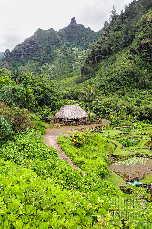 Limahuli Garden and Preserve on Kaua'i.