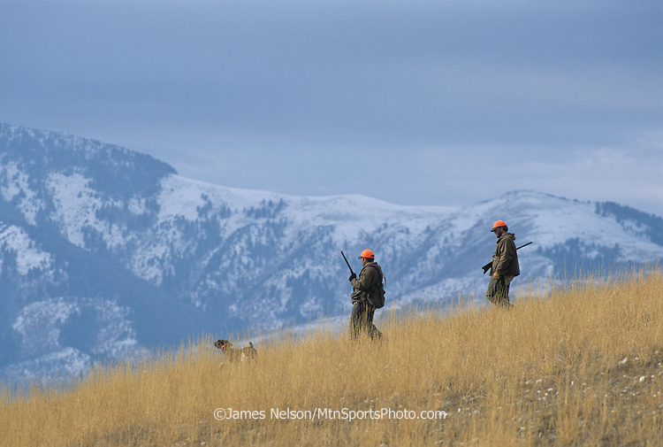 36-126. Hunters follow a German short-hair pointer along a ridge in the foothills of Utah's Wellsville Range in pursuit of Hungarian partridge.