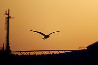 gabbiani, seagulls.