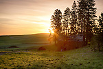 Idaho, North Central, Latah County, Moscow. Sunrise and a rustic barn on the Idaho Palouse in spring.