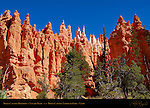 Bryce Canyon Hoodoos, Navajo Trail, Bryce Canyon National Park, Utah