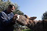 Ein Portrait von Toni Bacic  mit seinem Esel Bruno. Bruno ist eine traditioneller dalmatinischer Esel und der Einzige seiner Art in Neum. Bacic ist dabei, einen Campingplatz zu etablieren (Auto Kamp Mir), der auf Touristen abzielt, die an nachhaltigem ökologischen Tourismus mehr interessiert sind, als an Badeurlaub. /<br /> A Portrait of Toni Bacic and his donkey named Bruno. The Dalamtian donkey is the only one of it's kind in Neum. Bacic is about to build up a camping park (Auto Kamp Mir) that aims to attract tourist that are more interested in nature and ecological tourism than in swimming in the sea.<br /> / Der kleine Ort Neum liegt in Bosnien-Herzegovina und bildet den einzigen Zugang zum Meer des Balkanlandes. Auf einer Länge von 9 km durchschneidet der Ort das kroatische Staatsgebiet (Neum-Korridor) Seit dem EU-Beitritt Kroatiens ist Neum auf beiden Seiten von EU-Außengrenzen eingeschlossen. / The small city of Neum in Bosnia and Herzegovina is the only place in Bosnia, where the country has access to the adriatic sea. Over a length of 9 kilometers the area cuts Croatian territory in two pieces. Since Croatia became part of the European Union, the city of Neum is enclosed between two EU-boarders.