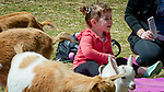 WOODBURY,  CT-051819JS04- Two-year-old Hattie Ewing of Middlebury is all smiles as she and her parents get ready for goat yoga during the annual Flanders Festival:  A Celebration of Art, Farming &amp; Nature at the Flanders Nature Center in Woodbury on Saturday. <br /> Jim Shannon Republican American