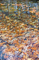 Leaves pool in sections of Big Piney Creek in Fall Creek Gorge Nature Conservancy in Warren County, Indiana