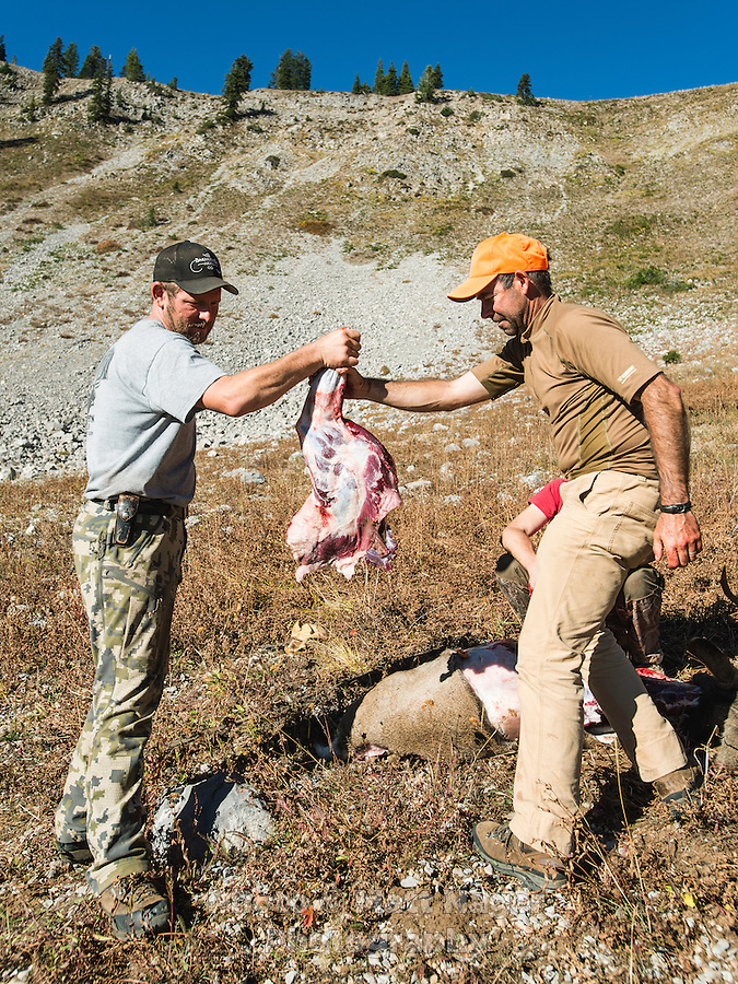 Mule deer hunting with Outdoor Life Editor Andrew McKean and guide Greg Kriese with Trefren Outfitters skin a shot deer on Greyback Ridge in the Hoeback Drainage of Wyoming Region H, outside of Alpine, Wyoming, September 23, 2015.<br /> <br /> Photo by Matt Nager