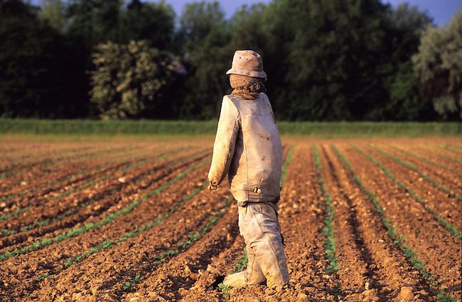 Epouvantail dans un champ, France. *** Scarecrow in a field, France.