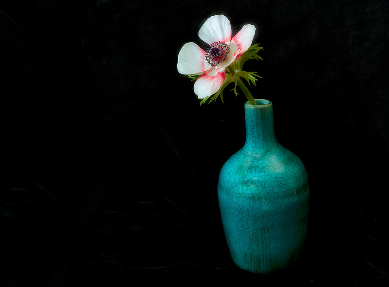 Anemone flower in vase.