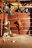 BELIZE, Punta Gorda, Toledo District, a chicken hangs before being prepared for lunch in the home of Desiree Mes, San Jose Maya Village