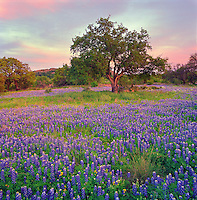Spring sunset with bluebonnets, Llano County, Texas.  In a good year, there are fewer places I'd rather be than the Texas Hill Country, surrounded by fields of wildflowers.<br /> <br /> Hassleblad 500 C/M, 50mm lens, Fuji Reala film