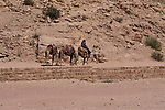 A young Bedouin man with his camels in Petra in the Hashemite Kingdom of Jordan.  Petra Archeological Park is a Jordanian National Park and a UNESCO World Heritage Site.