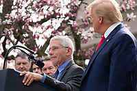 Anthony Fauci, Director of the National Institute of Allergy and Infectious Diseases, left, speaks during a news conference in the Rose Garden at the White House in Washington D.C., U.S., on Friday, March 13, 2020.  United States President Donald J. Trump announced that he will be declaring a national emergency in response to the Coronavirus.  Credit: Stefani Reynolds / CNP/AdMedia