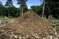 Wood Ant Nest - Formica rufa