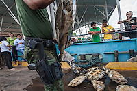 Amazon river turtle, seizure of illegal hunting by Amazonas State Environmental Police in Manaus city, north Brazil.