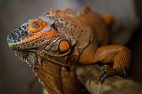 Herpetario: Santuario de reptiles de la UAQ